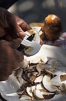Europe/France/Limousin/19/Corrèze/Saint-Pardoux-la-Croisille: Nettoyage et préparation des cèpes