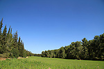 Israel, Shephelah, a view of Haruvit forest