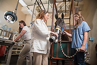 Equine Respriratory Research
