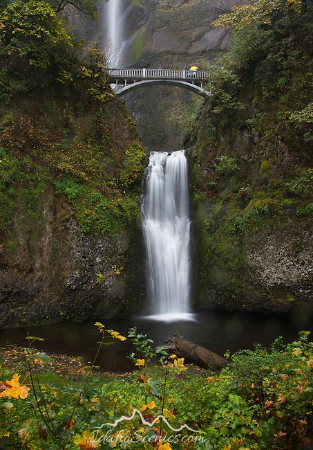 Oregon, Northwest, Troutdale, Multnomah. Multnomah Falls and autumn color on the rain.