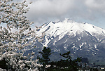 Cherry blossom tress in full bloom frame Mount Iwake  at the Cherry Blossom Festival held in Oyo Park near Hirosaki Castle in Aomori Prefecture in Northern Honshu, Japan. Over 1500 cherry trees come into bloom from late April to Early May. (Jim Bryant Photo)......