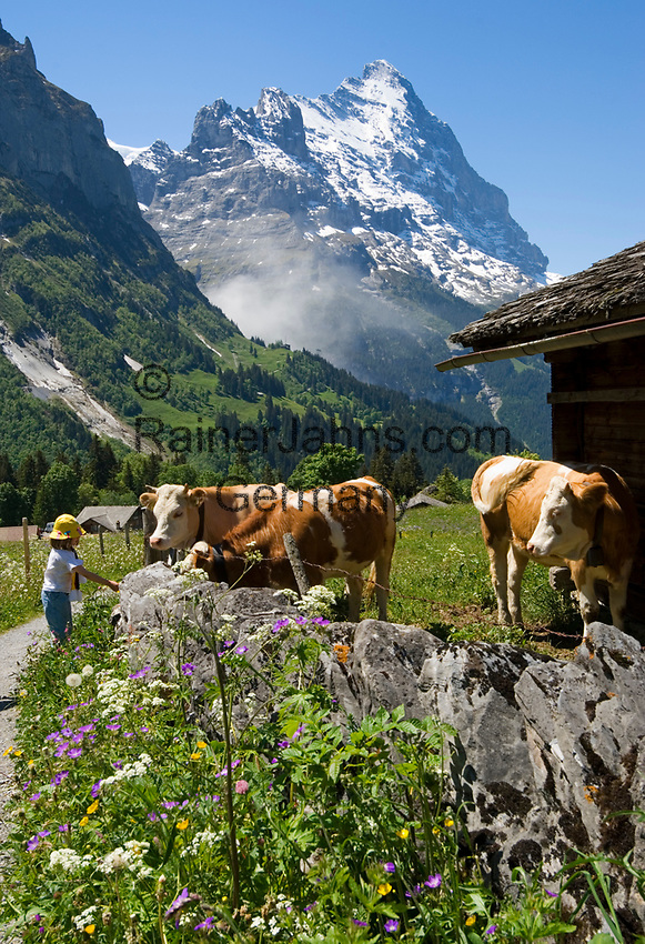 CHE, Schweiz, Kanton Bern, Berner Oberland, Grindelwald: Maedchen und Kuehe oberhalb von Grindelwald vorm Eiger | CHE, Switzerland, Bern Canton, Bernese Oberland, Grindelwald: girl and cattle above Grindelwald with Eiger north face