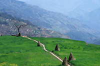 NEPAL Himalaya, Thami village Suspa, terrace fields with wheat in mountains / NEPAL Himalaja, Terrassenfelder mit Weizen des Thami Dorf Suspa in Berghaengen im Himalaya Gebirge