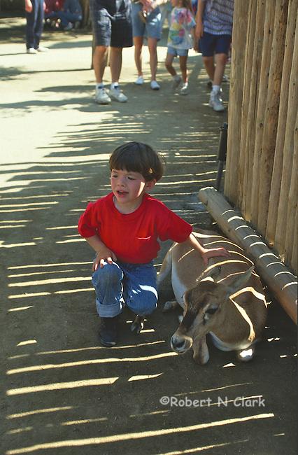 Boy at petting zoo