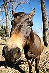 Donkey in Oklahoma.