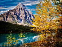 Waterfaowl Lakes and Mt. Chephren with fall colored aspens.  Banff National Park. Alberta, Canada