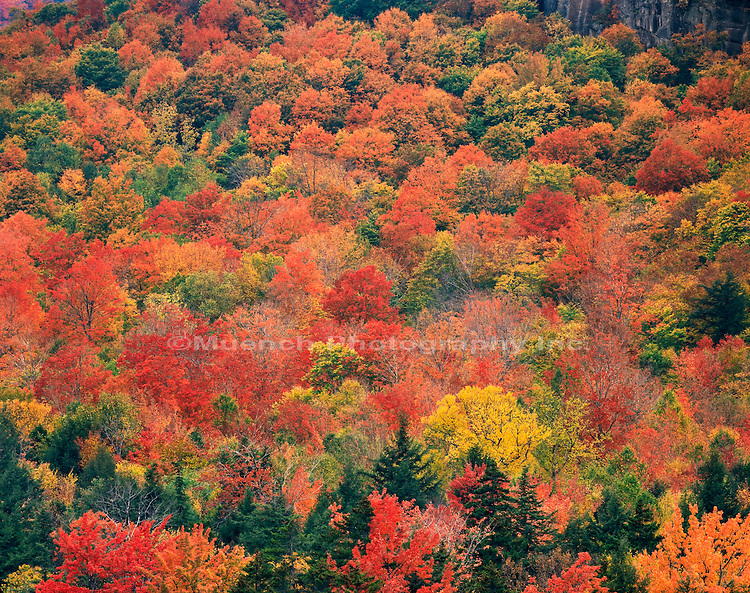 Autumn forest, Swift River Valley, White Mountains
