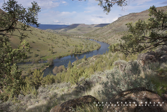 Looking over the Deschutes River from the shade of a juniper.