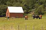 Red barn, grazing horses, Lechner Bar-44 Ranches, southwest Colorado