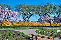 George Mason Memorial, Cherry Blossom trees,  District of Columbia, Washington D.C.