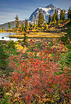 Mount Baker-Snoqualmie National Forest, WA: Mountain ash in fall color at Picture Lake with afternoon sun on Mount Shuksan