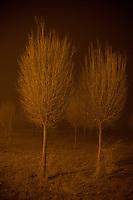 Xinjiang dust storm