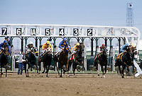 Horseracing at Woodbine Racecourse at Coburg in Canada