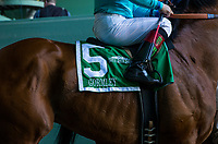 ARCADIA, CA - MARCH 11: Gormley #5, before the San Felipe Stakes at Santa Anita Park  on March 11, 2017 in Arcadia, California. (Photo by Alex Evers/Eclipse Sportswire/Getty Images)