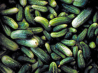 A pile of small to medium sized cucumbers, pickling, produce, green, spring, greenish, garden, summer, vegetable, vegetables, fresh, health food, agriculture, farming.