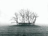 Stall in der Marsch, Schleswig-Holstein, Deutschland 1980