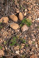 soil detail mas du notaire rhone france