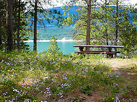 Picnic spot among the wildflowers at Lake Koocanusa, Montana.