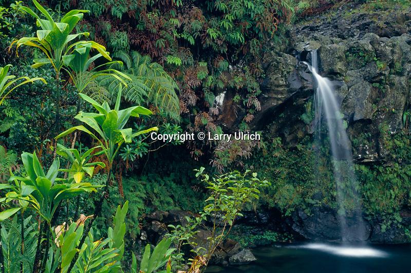 Puaakaa State Wayside<br /> Hana Highway<br /> Island of Maui<br /> Hawaii