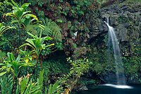 Puaakaa State Wayside<br />