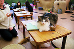 """January 15, 2015, Tokyo, Japan : Customers enjoy relaxing with cats at the """"Temari No Uchi"""" Cat Cafe in Tokyo, Japan. Temari No Uchi, a Neko Cafe (cat cafe) based in Kichijoji where visitors can watch and interact with 19 cats whilst eating or having a coffee break. The store opened in April 2013 and allows to customers to play with cats and to escape from the stresses of the city life. The entrance fee is 1200 JPY (9.75 USD) on weekdays and 1600 JPY (12.99 USD) on weekend with discounts after 7pm. Drinks and food are charged separately. According to the shop staff most visitors are Japanese women but also men and children visit this cafe. The fist cat cafe in the world opened in Taipei, Taiwan in 1998, and the fist Japanese store was opened in Osaka in 2004. (Photo by Rodrigo Reyes Marin/AFLO)"""