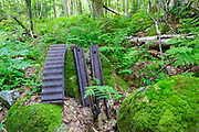 Artifacts at logging Camp 11 of the East Branch & Lincoln Railroad (1893-1948) in the Pemigewasset Wilderness in Franconia, New Hampshire. This rail-side camp was located along the Lincoln Brook Branch of the railroad. The removal of historic artifacts from federal lands without a permit is a violation of federal law.