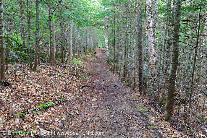 The Hancock Notch Trail in Lincoln, New Hampshire during the spring months. This section of the trail utilizes the old railroad bed of the Hancock Branch of the East Branch & Lincoln Railroad (1893-1948) in New Hampshire. The Hancock Branch was used during the early days of the railroad.