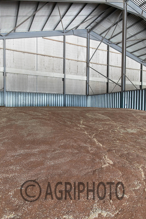 24.7.2020 Linseed in a farm flat floor grain store.  <br /> ©Tim Scrivener Photographer 07850 303986<br />      ....Covering Agriculture In The UK.