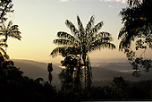 Para State, Brazil. Dawn view over misty rainforest with palms and other vegetation in silhouette; Serra dos Carajas, Amazon.