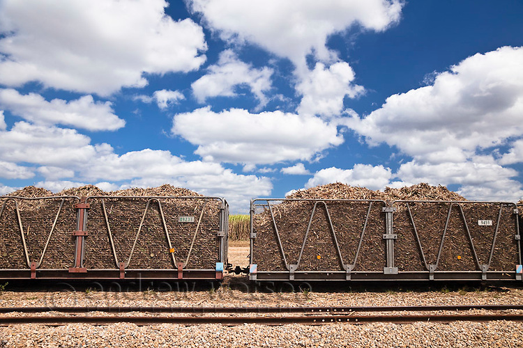 Harvested sugar cane loaded in bins ready to be transported to the sugar mill.  Proserpine, Queensland, Australia