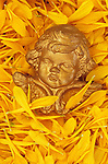 Head and wings of Cherub painted gold lying in bed of yellow Chrysanthemum petals