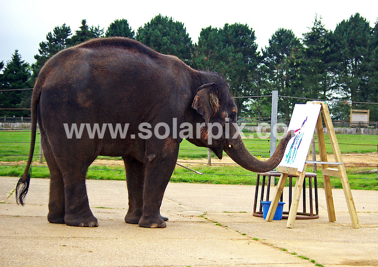 "**ALL ROUND PICTURES FROM SOLARPIX.COM**                                             **NO UK NEWSPAPER PUBLICATION**.**UK MAGAZINE & SUPPLEMENT PUBLICATION ONLY** AND NO PUBLICATION IN AUSTRALIA, BELGIUM, FRANCE, GERMANY, ITALY, SCANDINAVIA AND USA**                                                                                  Painting Pachyderm at ZSL Whipsnade Zoo, UK..ZSL Whipsnade Zoo's resident artist is busy putting the finishing touches to her latest masterpieces, ready to celebrate Elephant Appreciation Day this weekend..Karishma, a 13-year old female Asian elephant, has turned out to be quite the talented painter, and loves nothing more than using her trunk to wield a brush and create colourful designs on canvas. .Elephant keeper Elizabeth Becker says: ""Karishma really enjoys painting, and it demonstrates just how dexterous elephant's trunks really are..Whilst her paintings may not be as detailed as a Da Vinci, we think the finished products are pretty amazing!"".Karishma's handiwork (well, trunk-work!) will be on display at the Zoo for the duration of Elephant Appreciation Day. Hosted by ZSL Whipsnade Zoo to raise money for its worldwide elephant conservation projects, the celebrations will be held over Saturday 24 and Sunday 25 September.                                                                                     JOB REF:    14000    SFE       DATE:  20.09.11                                                          **MUST CREDIT SOLARPIX.COM OR DOUBLE FEE WILL BE CHARGED**                                                                      **MUST AGREE FEE BEFORE ONLINE USAGE**                               **CALL US ON: +34 952 811 768 or LOW RATE FROM UK 0844 617 7637**"