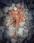 2.9.14 - Red Pine...