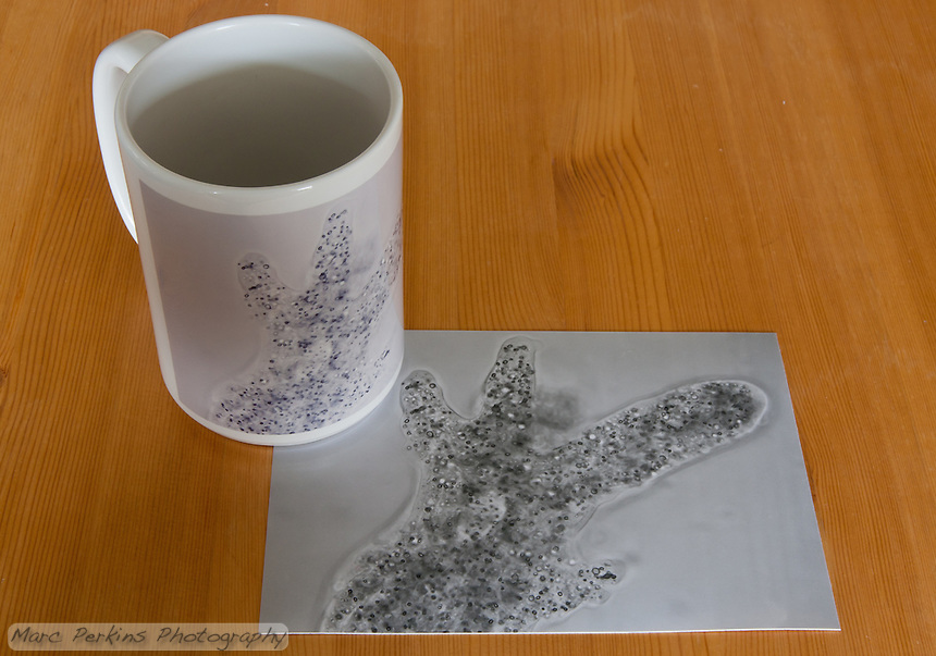 A mug and black and white print of the exact same underlying file, made by BWC Photo Imaging (http://www.bwc.net) in the same order; the difference in contrast is startling.  The print was printed on their B&W paper.