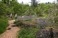 Visitors on bark mulched trail in Camassia Nature Preserve, The Nature Conservancy protected park, Portland Oregon