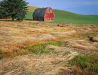 Whitman County, WA<br /> A field of fresh cut hay in front of a red barn in summer