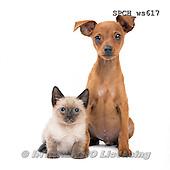Xavier, ANIMALS, REALISTISCHE TIERE, ANIMALES REALISTICOS, FONDLESS, photos+++++,SPCHWS617,#A#