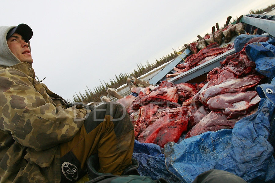 Vuntut Gwitchin First Nation member Lance Nukon sits in a boat full of fresh, butchered caribou meat on the Porcupine River near Old Crow, Yukon Territory.