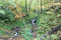 Stock photo: Small stream passing through forest in the season of fall in the great smoky mountain national park.