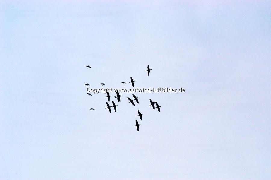 Storch, Vogelzug, Thermik, kreisende Stoerche, Mecklenburg-Vorpommern