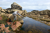 Setting a trap in a rock pool at Old Town Bay, St Mary's, Isles of Scilly, UK