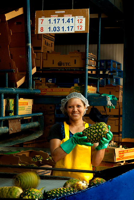 Pineapple factory worker inspects pineapples before they are boxed.  Costa Rica is one of the biggest exporters of pineapples in the world.