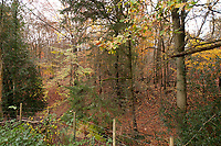 BNPS.co.uk (01202 558833)<br /> Pic: Fine&Country/BNPS<br /> <br /> The property comes with commoners rights to harvest wood.<br /> <br /> Perfect corner of Ashdown forest...<br /> <br /> A beautiful country home in the heart of Ashdown Forest, the home of Winnie the Pooh, is on the market for £2.25m.<br /> <br /> End House is in a secluded spot of almost five acres in the East Sussex forest, with the nearest village about a mile away.<br /> <br /> The property has its own small stream for playing Pooh sticks and the new owner would have 'Commoner Rights' to use the 6,500-acre forest for grazing and wood cutting.<br /> <br /> Author AA Milne, who lived on the edge of Ashdown Forest, used the woodland there as the setting for his famous books about his son Christopher Robin's stuffed bear.