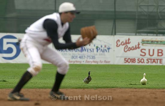 Ducks on the field as Murray defeats West in eight innings.  04/04/2001<br />