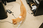 Emile Rosales, 23, makes a living playing video games. He says it isn't as easy as it sounds, though, because he has to record, edit, upload multiple videos to Youtube each week. His cat Kirby (named after a game) walks in his Conyers, Georgia apartment, July 21, 2013.