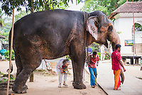 Tourist walking under an elephant at Temple of the Sacred Tooth Relic (Temple of the Tooth, Sri Dalada Maligawa) in Kandy, Sri Lanka, Asia. This is a photo of a tourist walking under an elephant at the Temple of the Sacred Tooth Relic (Temple of the Tooth, Sri Dalada Maligawa) in Kandy, Sri Lanka, Asia. Kandy is the cultural capital of Sri Lanka, and the Temple of the Sacred Tooth Relic (Temple of the Tooth, Sri Dalada Maligawa) is the highlight.