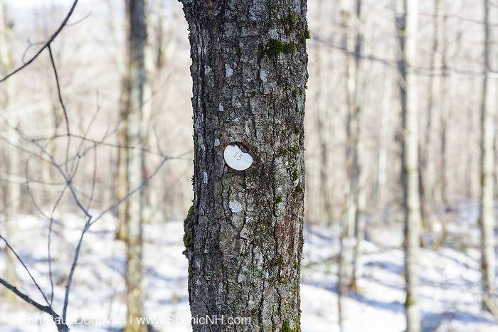 Tree tagged for some kind of research in Lafayette Brook Scenic Area in Franconia, New Hampshire USA.