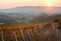 ITALY - Piedmont - Le Langhe
