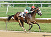 Tea Time winning The Beautiful day Stakes at Delaware Park racetrack on 7/3/14