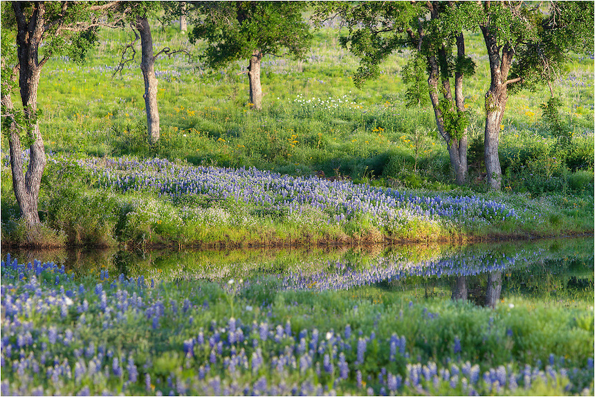 I had to turn around when I caught this view out of the corner of my eye while driving down a Texas road. Though a fence stood between me and this tranquil bluebonnet scene, I used a telephoto lens to capture this reflection.